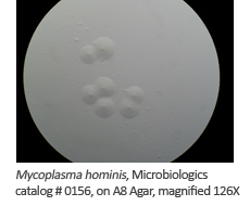 Microbiologics® Magnified Newsletter